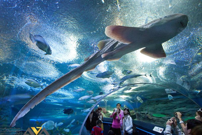 آکواریوم دنیای زیر آب پاتایا