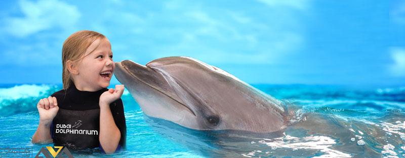 دلفین بی دبی